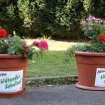 Blühender Schulhof 022-1
